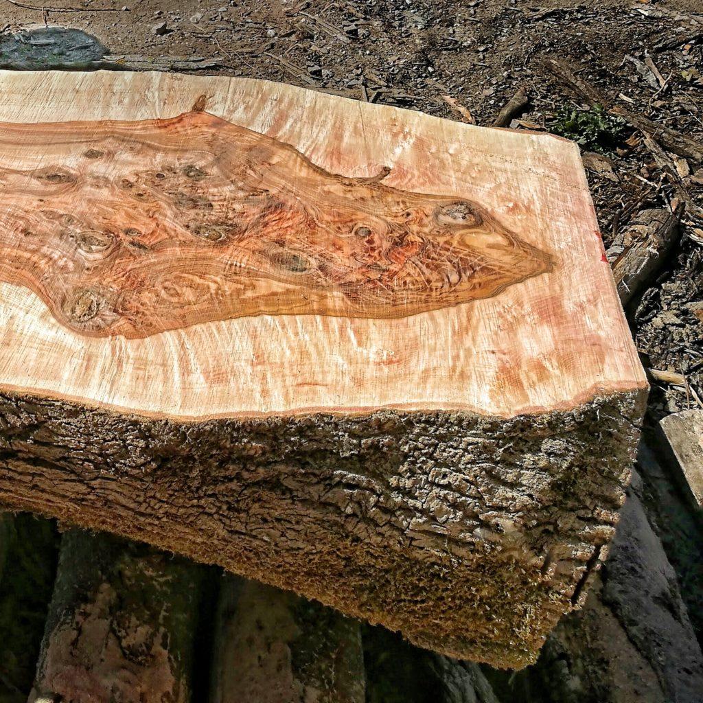 découpe de plateau de bois free form Live Edge - Salvateur