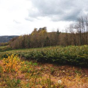 reforestation-bois-durable-eco-responsable-mobilier-sur-mesure-Salvateur