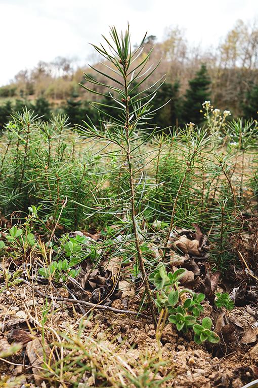 reforestation-un-meuble-achete-un-arbre-plante-Salvateur